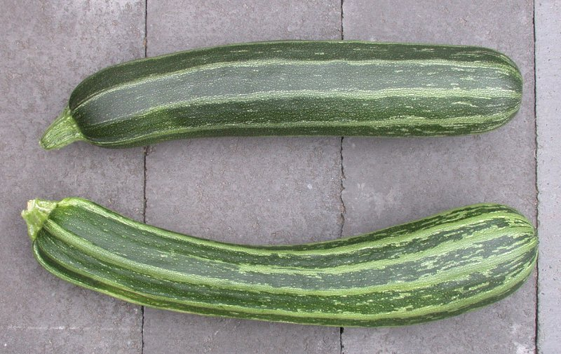 Zucchini with No Complaints
