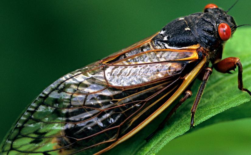 Wednesday Writing Prompt — Cicadas